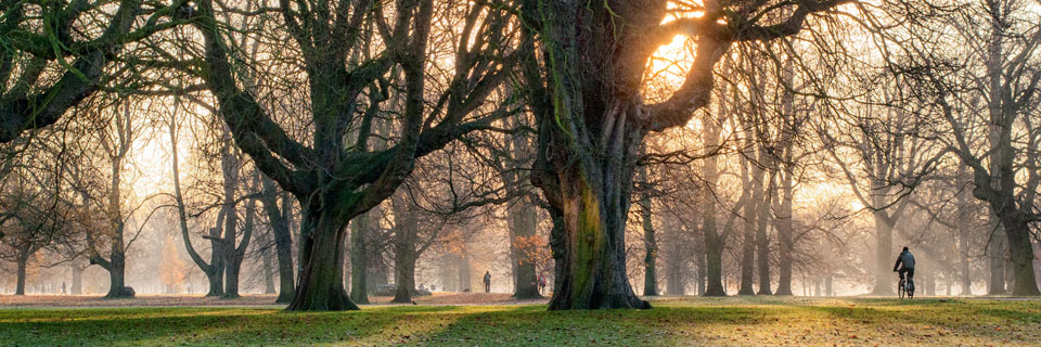 Header image for Friends of Hyde Park & Kensington Gardens